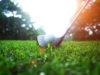 Registration Open for Summer Golf Leagues